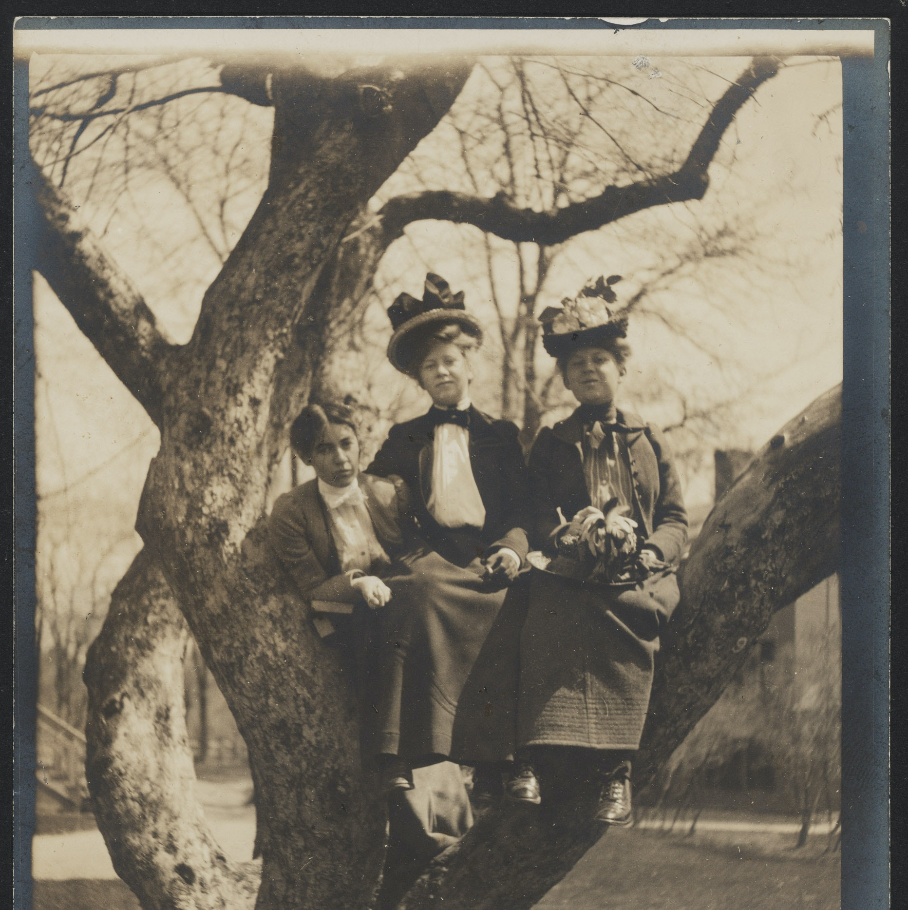 Three Radcliffe students sitting in the apple tree